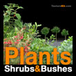 Plants Shrubs & Bushes - Plantes arbustes et buissons - texture