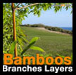 Bamboo branches layers Bambou