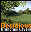 Decidious branches layers Feuillus