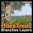 Olive branches layers Olivier