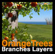 Orange branches layers Oranger