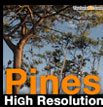 Pines High Resolution - pins maritimes - pin des landes - pinus pinaster - pinus halepensis